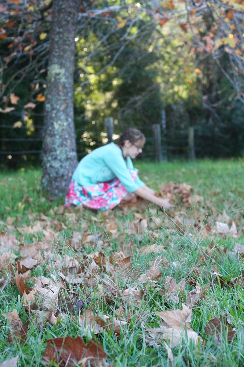 Autumn leaves5